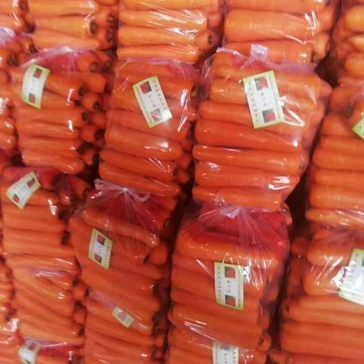 开封祥符区三红七寸参胡萝卜 15cm以上