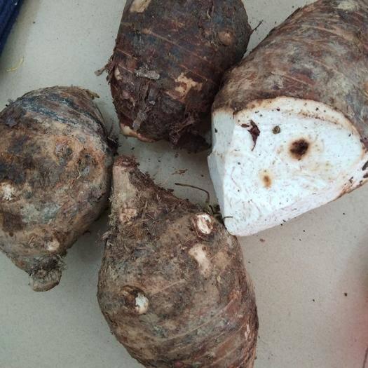 广西壮族自治区南宁市西乡塘区白芋芽 袋装 5-10cm
