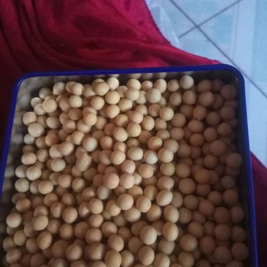 黑河嫩江县黑河43号 新豆,高蛋白
