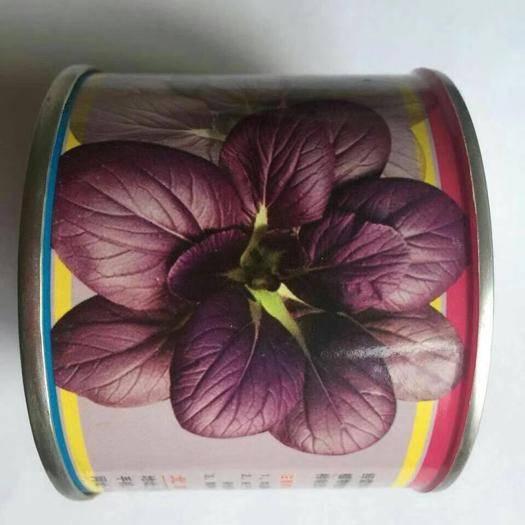 济南槐荫区紫油菜种子 油菜种子