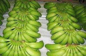 徐闻县 香蕉