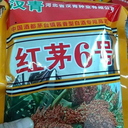 滄州青縣 批發優質釀酒高粱種子