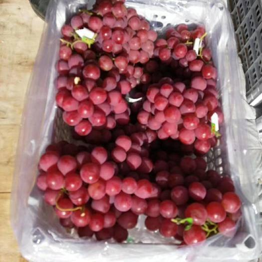 涿鹿县红地球葡萄 1.5- 2斤 10%以下 1次果