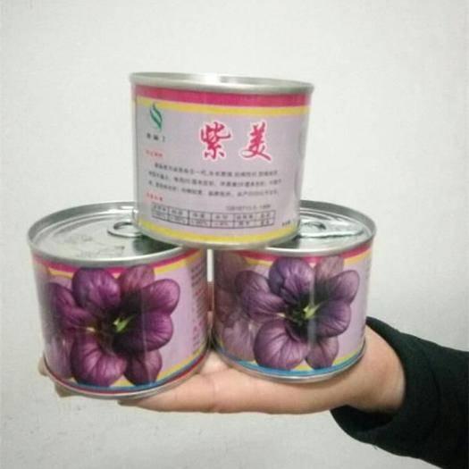 济南历城区紫油菜种子