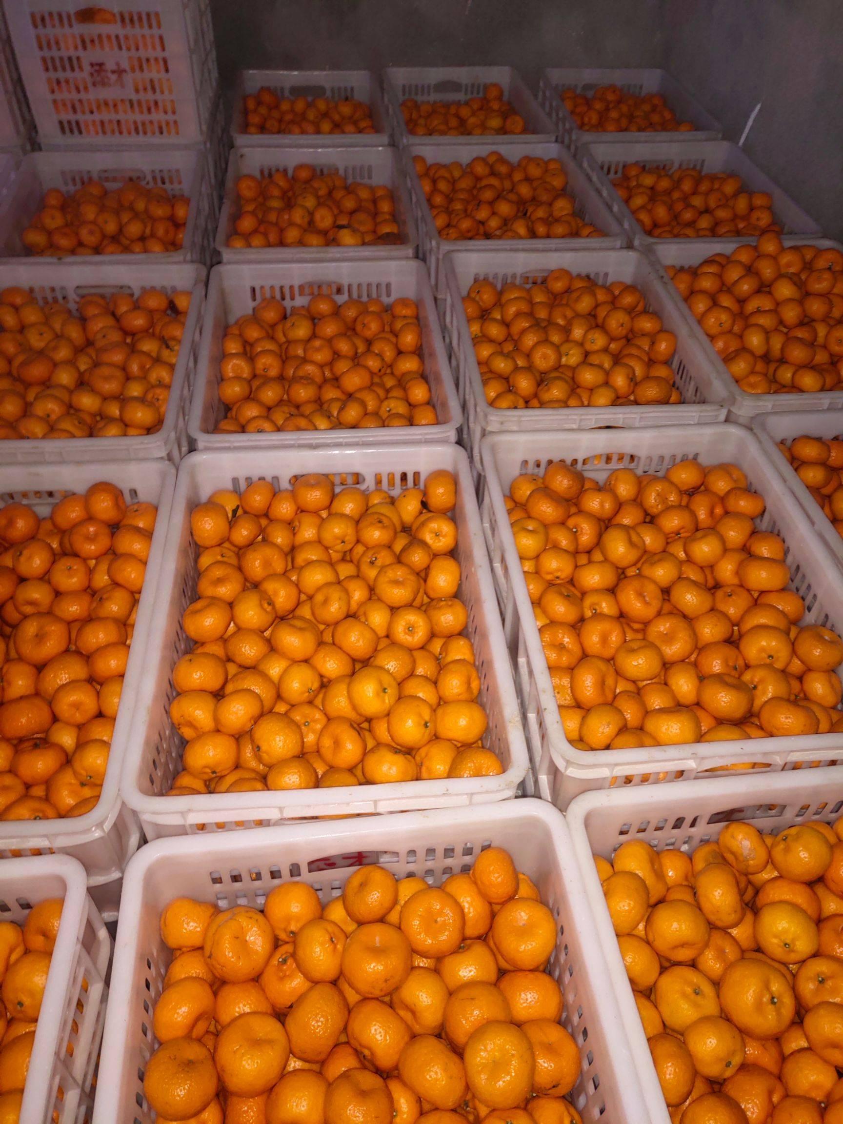 蜜桔 3.5 - 4cm 1.5 - 2两