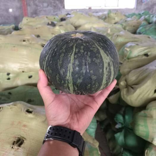 寿光市新西兰南瓜 2~4斤