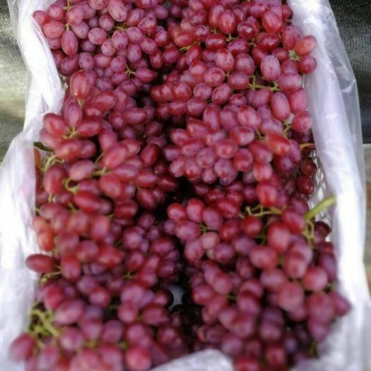 莱西市克瑞森无核葡萄 5%以下 1次果 1-1.5斤