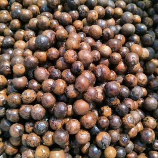 滁州天长市芡实种子