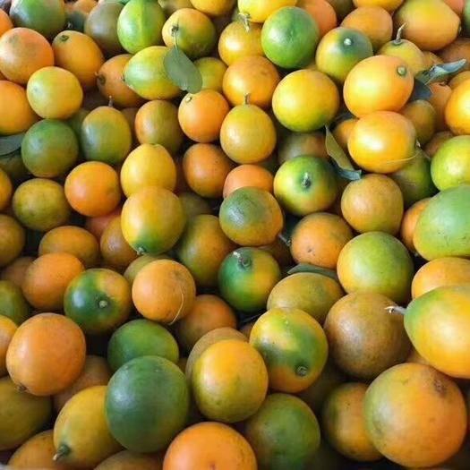 桂林临桂区 桂林纯甜的脆皮金桔,皮薄无籽无渣,不麻口,支持一件代发