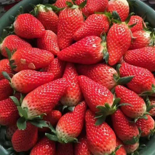 平度市甜寶草莓 20克以下
