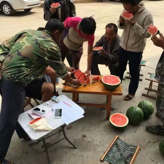 南阳卧龙区 金蜜满园高品质西瓜种子 优质高产