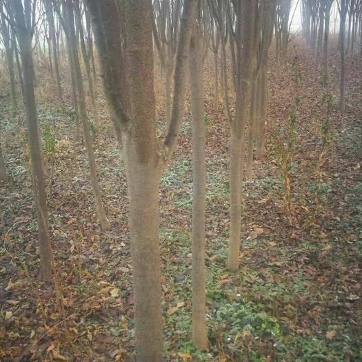 泌陽縣灌木林地 養殖觀光果樹種植有山有水