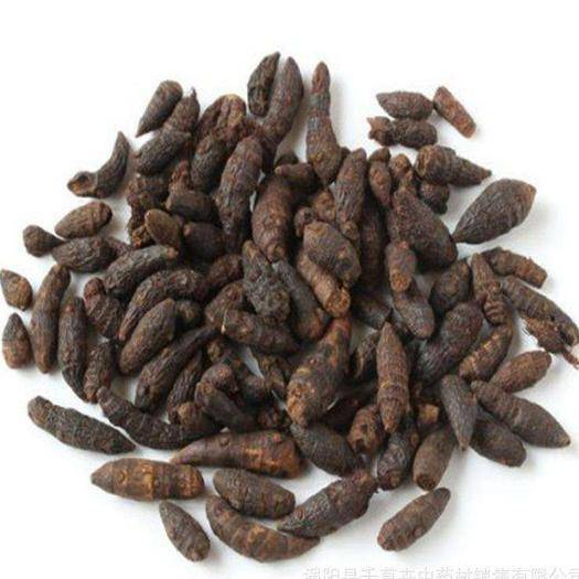 万宁市 海南香附种植产业,含量足,个头大,品质优,欢迎订购