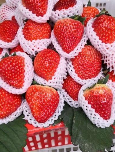 德昌縣 自家種植露天草莓,口感好,價格美麗歡迎下單哦