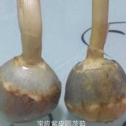 扬州宝应县白肉慈菇 20~30g