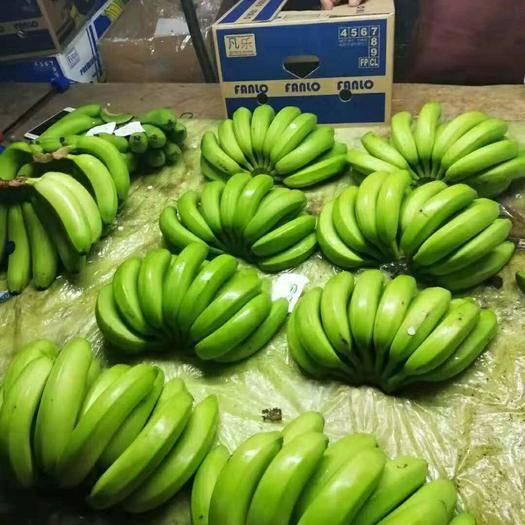 深圳菲律宾香蕉 七成熟
