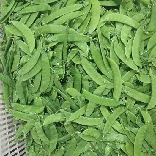 云南省红河哈尼族彝族自治州建水县荚豆 12cm以上