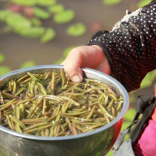 四川省宜宾市兴文县莼菜 国家一级重点保护野生植物