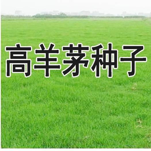 宿迁沭阳县高羊茅种子