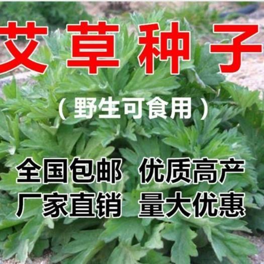 宿迁沭阳县艾草种子