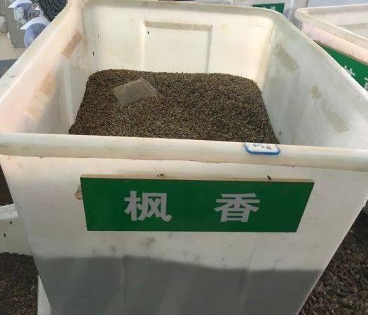 沭阳县枫香种子