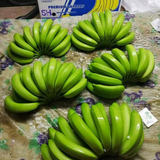 上海菲律宾香蕉 七成熟