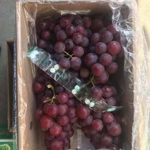 石家庄晋州市巨峰葡萄 0.6-0.8斤 5%以下 1次果
