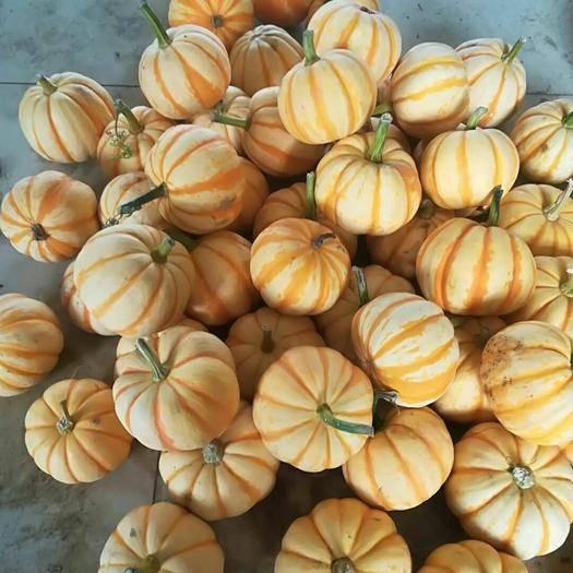 潍坊青州市桔瓜 1斤以下