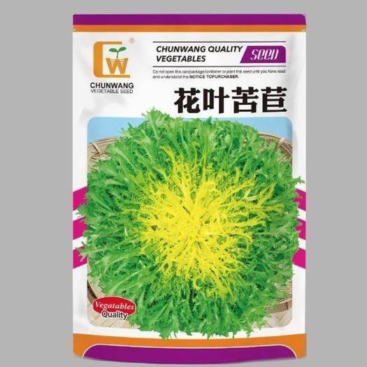 酒泉苦苣种子