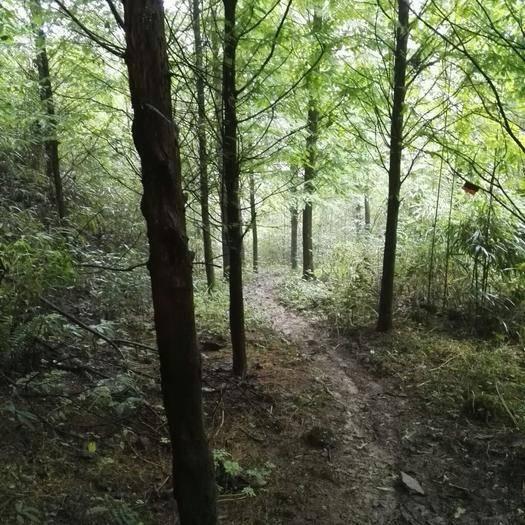 大邑縣灌木林地 轉讓 20~30年 100~500畝