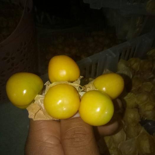勐海县灯笼果 45mm以上 2 - 3两  灯笼果