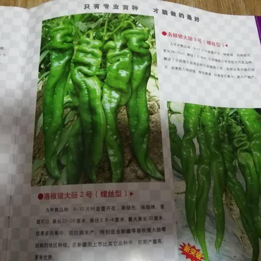 宿州埇橋區螺絲辣椒苗 10~14片真葉