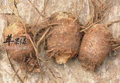 牡丹江绥芬河市关白附子种子