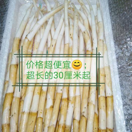 云南省红河哈尼族彝族自治州蒙自市象牙菜 特长(草芽)特价批发零售