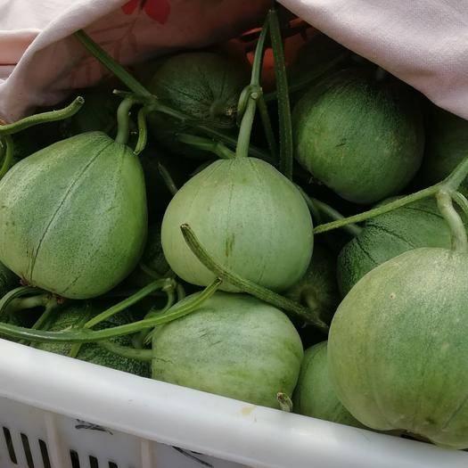 莘縣綠寶甜瓜 1斤以上