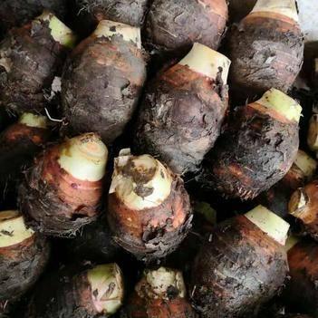 香芋包粉包糯原产地直供一手货源  大量批发
