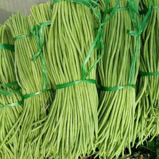北海合浦县白花四季豆 15cm以上