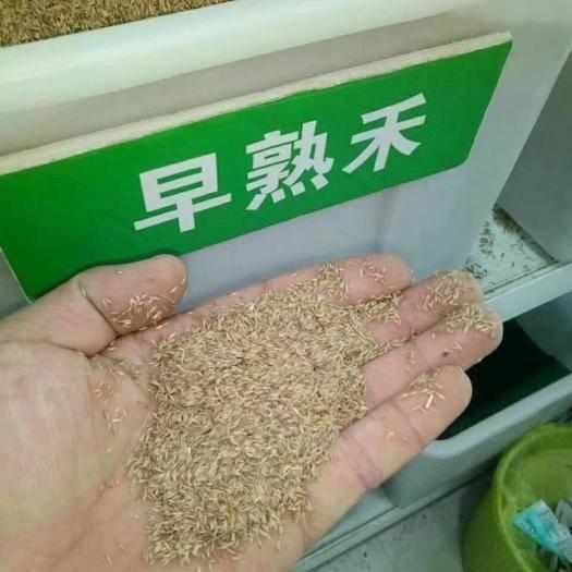 宿迁沭阳县早熟禾种子