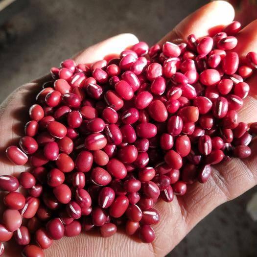 綏化北林區大紅豆 紅小豆