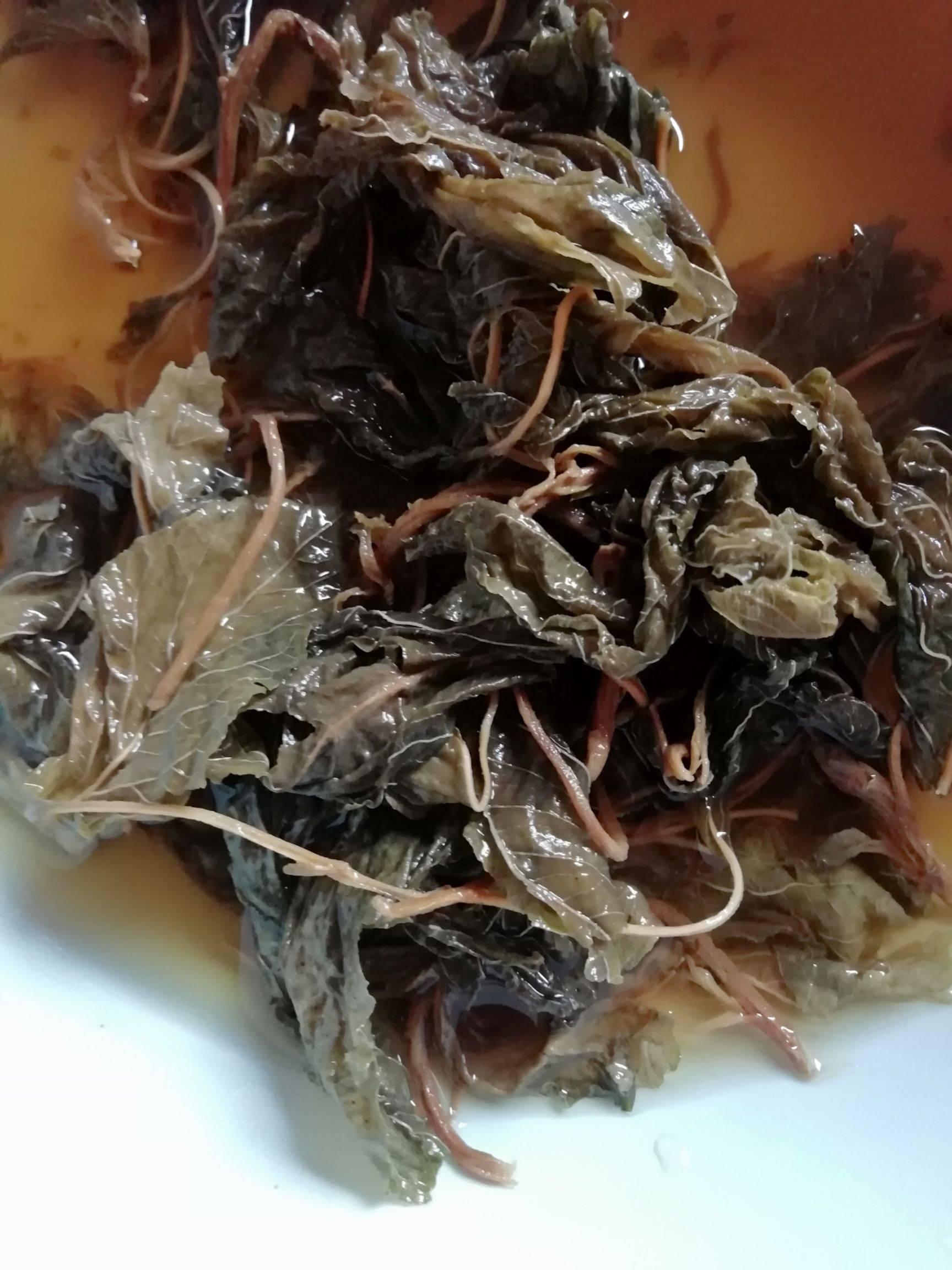干苋菜 10-15cm 鲜绿