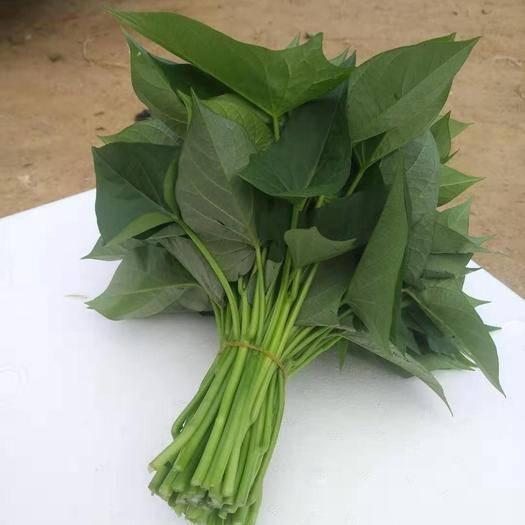 樂東黎族自治縣 海南  地瓜葉  紅薯葉 種苗