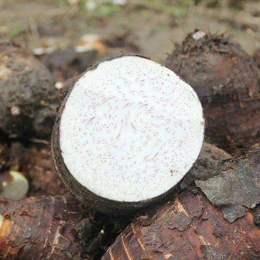 全州縣檳榔芋 廣西桂林安和鄉 都龐香芋 單重500g以上  包粉包糯