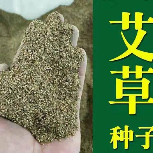 文山文山市艾草种子 芽率92%  支持货到付款