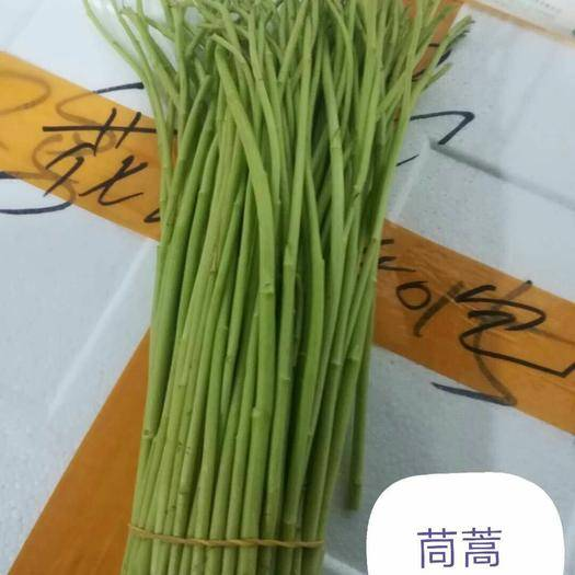 廣州白云區光桿茼蒿 35~40cm