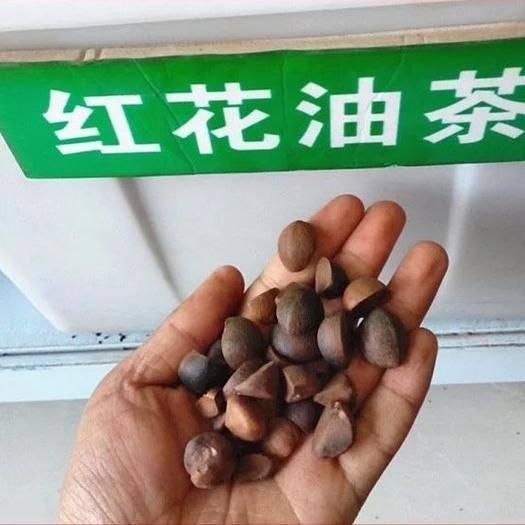 宿迁沭阳县油茶种子