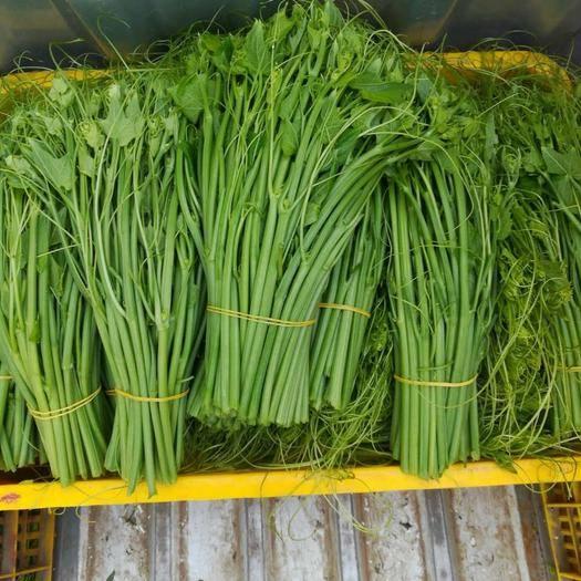 广西壮族自治区梧州市岑溪市佛手瓜藤尖 人工种植 25cm