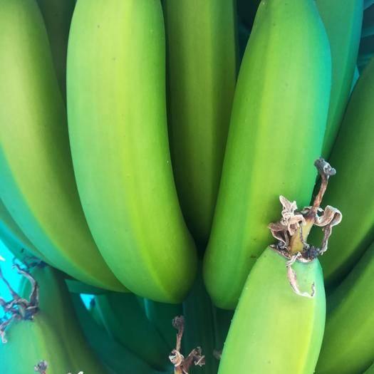 东莞市广东香蕉2号 八成熟