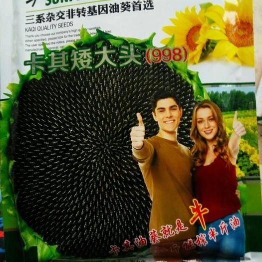 宿迁沭阳县油茶种子  矮大头油葵种子