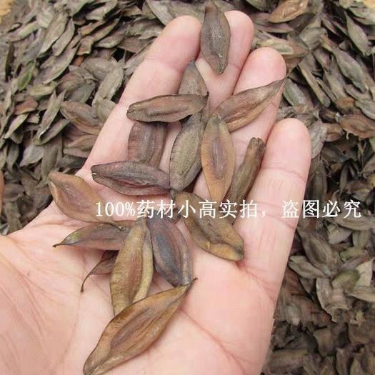 沭阳县多花木兰种子