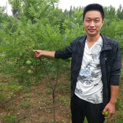 泰安岱岳区文冠果树苗 1.0~1.5米